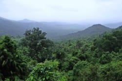 Raiinforest - public domain